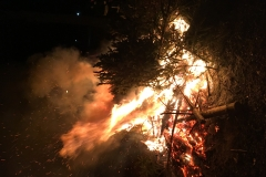 Weihnachtsbäume 2018